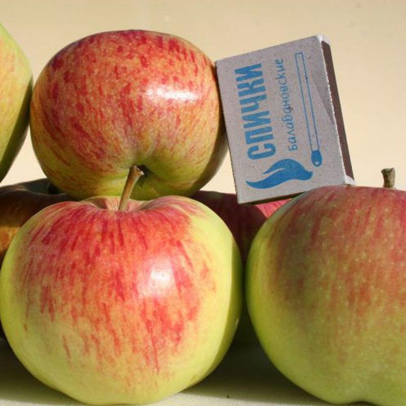 Яблоня Чистотел