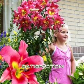 Лилия размером с дерево